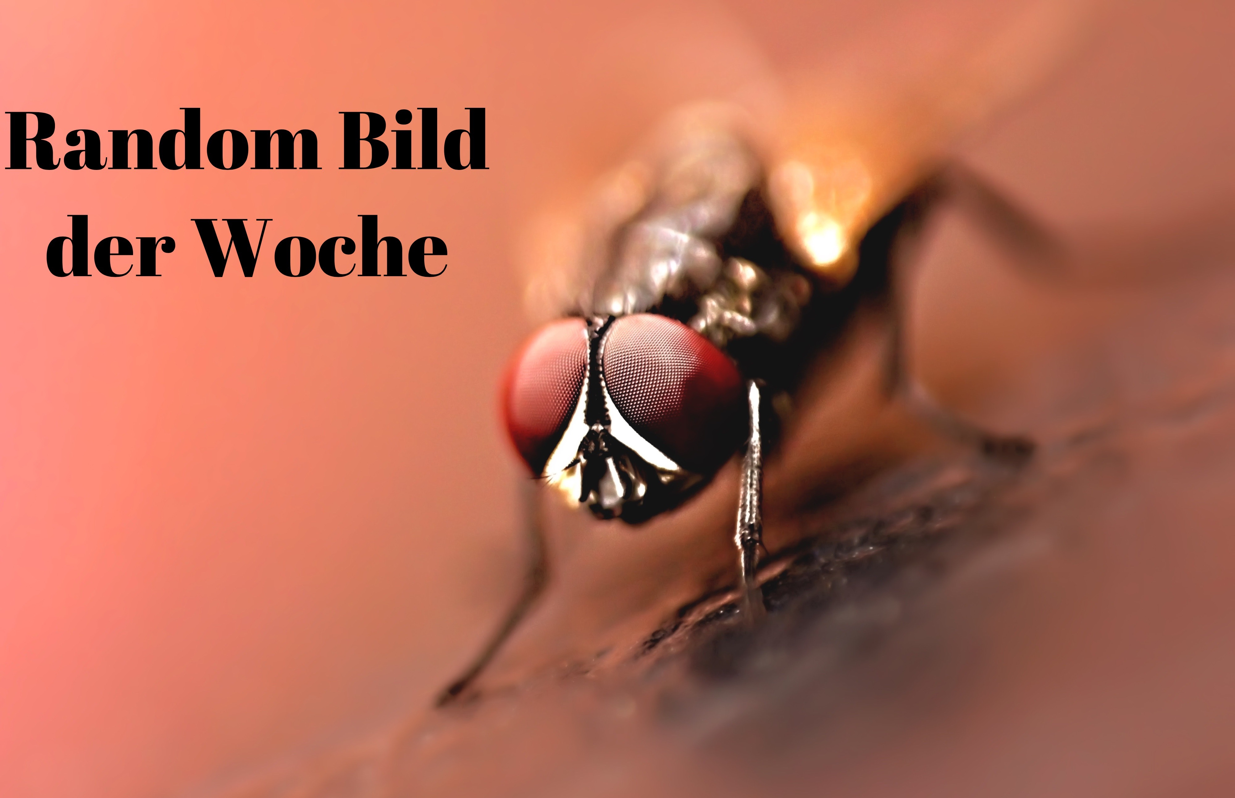 close-up-photography-of-brown-wasp-2608982-2